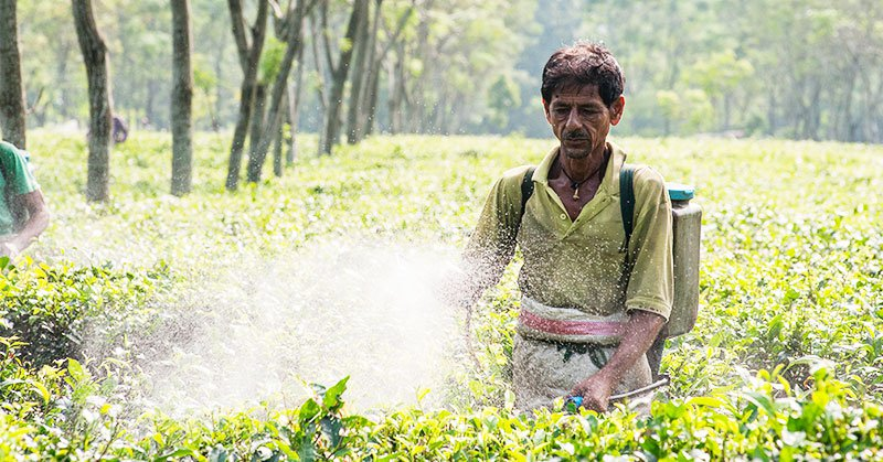 tea-plantation-workers-spray-chemicals2[1].jpg
